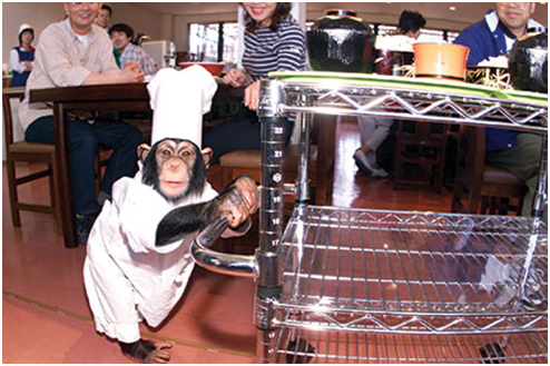 arkhe-kayabukiya-japan-weird-restaurants